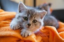 Avete un gattino?