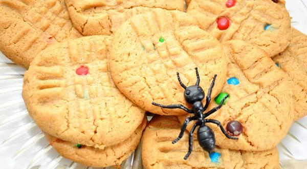Formiche in casa ecco i rimedi ecologici per cacciarle - Formiche in cucina ...