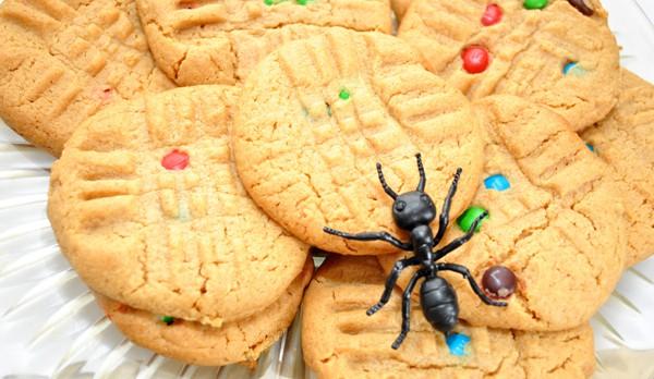 Formiche in casa?