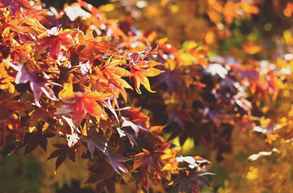 Mete per l'autunno